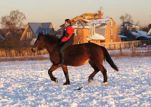 Сбор новогодних ёлок для дружной компании лошадок
